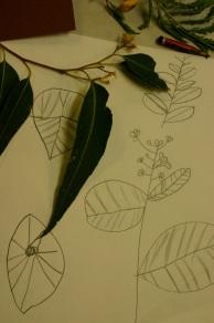 craiglea-observational-drawing
