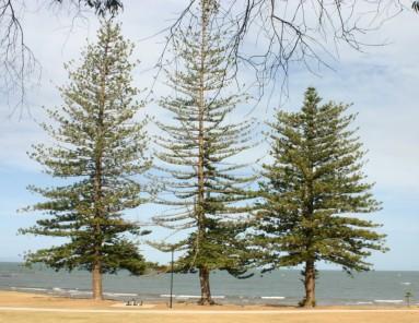 trees Scarborough