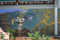 scrub turkey and carpet snake mural