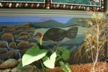 scrub turkey mural