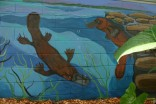 platypus pair on mural
