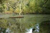 mangrove lagoon Coochiemuldo