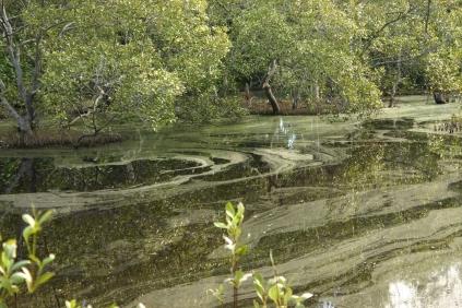 Coochiemudlo lagoon