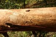 termite patterns Coochiemudlo