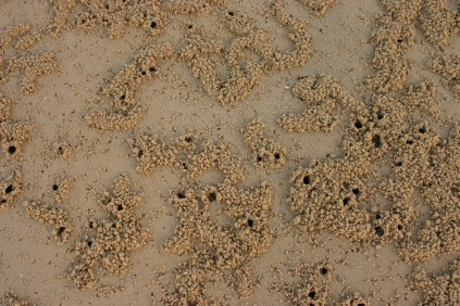 Coochiemudlo crab and bird patterns