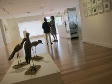 curlews in Gallery