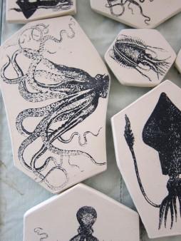 squid beauty