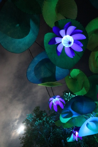 Kez Howell Woodford Festival Blue Lotus lights